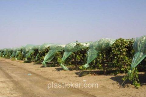 plastics-cover-materials-for-table-grapes-3-638